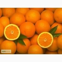 Апельсин Абхазия (Вашингтон) оптом без посредников