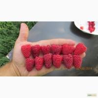 Бизнес на свежей ягоде
