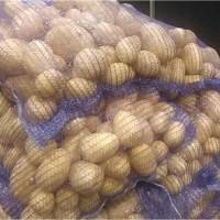Картофель мытый премиум класса Гала 5+ от производителя РБ