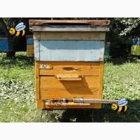 Пчелосемьи (среднерусская порода) в Санкт-Петербурге