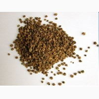 Семена свеклы (сорта: Мондоро, Калигула, Соппоро)