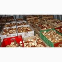 Закупим грибы в Томске, дорого