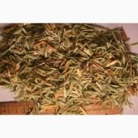 Овес лекарственный трава