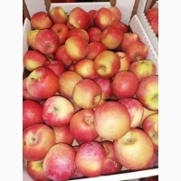 Яблоки оптом от производителя, сорта в ассортименте