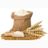 Купим муку пшеничную и ржаную
