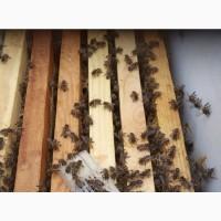 Продам пчелопакеты в наличии