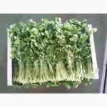 Продаем зелен из Испании