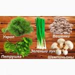 ООО «ПромСибАгроТрейд» город Омск, реализует следующую продукцию