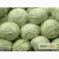 Покупаю овощи ифрукты ( картофель, капусту) и др