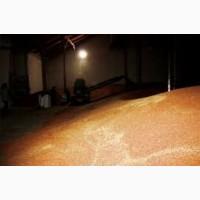 Пшеница оптом от производителя г. Оренбург