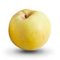 Яблоко садовое Антоновка, осенний сорт