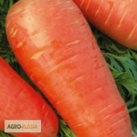 Семена моркови Кордоба F1 (Бейо)
