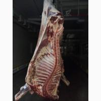 Говядина (бык корова)