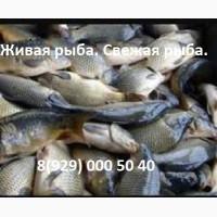 Живая рыба. Продам рыбу оптом