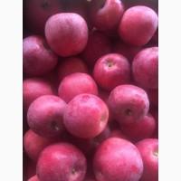 Яблоки Красных сортов опт