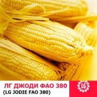 ДЖОДИ (ФАО 380) гибрид кукурузы ЛИМАГРЕЙН (Limagrain)
