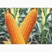 Продам семена кукурузы селекции РОСС 209, РОСС 199, краснодарский 194