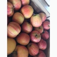 Продаются яблоки 1-ых сортов