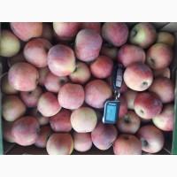 Яблоки от производителя Крым