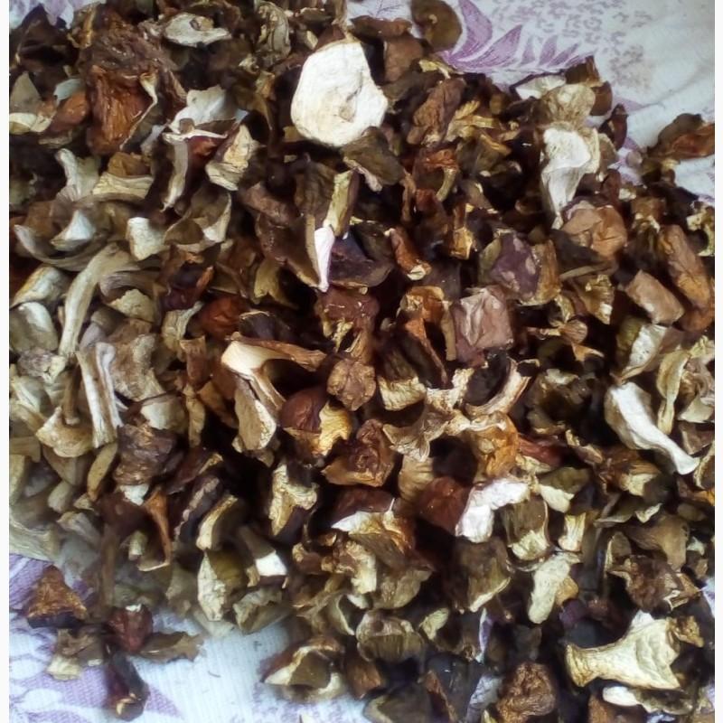 Белые грибы как сушить с картинками