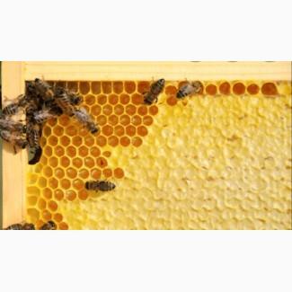 Продам пчелопакеты 4 рамки расплода карпатка