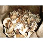 Продажа белого сухого гриба