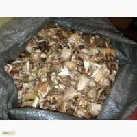 Сушеные грибы вешенка