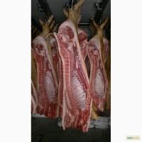 Свинина 1-2 категория в полутушах