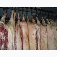 Полутуша Свиноматки