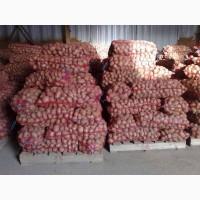 Картофель оптом от производителя склад в Оренбурге