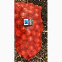 Лук репчатый нового урожая оптом 5+ от производителя 16 р./кг