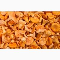 Продам грибы, ягоды