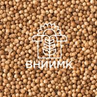 Семена кориандра ФГБНУ ФНЦ ВНИИМК