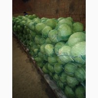Продаем капусту беллокочанную