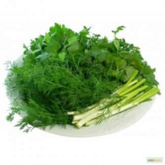 Продаем зелень. В ассортименте лук, укроп, петрушку, кинзу, щавель, шпинат, базилик