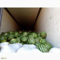 Арбузы оптом от 20 тонн