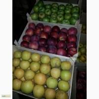Продам яблоки зимних сортов из Молдавии