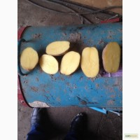Картофель оптом от 20 тонн. Брянская область. Калибр 5+. Отличное качество