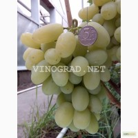 Продам саженцы Винограда 178 сортов