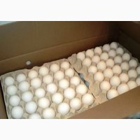 Яйцо инкубационное, бройлер, утка, мулард, гусь индюк, цесарка
