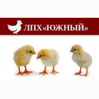 Цыплята, утята, индюшата, куры молодки