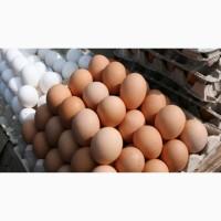 Продам яйца куриные оптом
