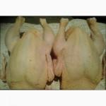 Свежее мясо бройлерных цыплят и кур несушек