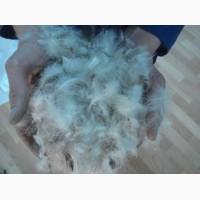 Закупаю пух перо гуся и утки