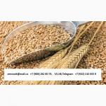Пшеница 3, 4, 5 класс Экспорт из РФ