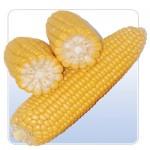 Купим кукурузу на экспорт