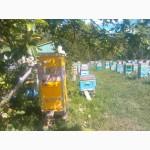 Пчелопакеты среднерусские