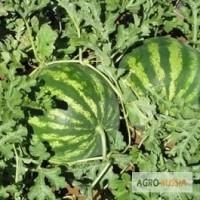 Семена арбуза. Сорт «Кримсон Свит» (Clause - Франция)