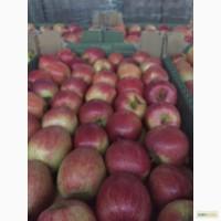 Реализуем яблоки с Краснодарских садов