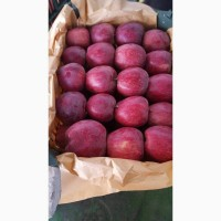 Яблоки оптом из Ирана
